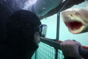 Shark Cage Diving Unlimited Gansbaai