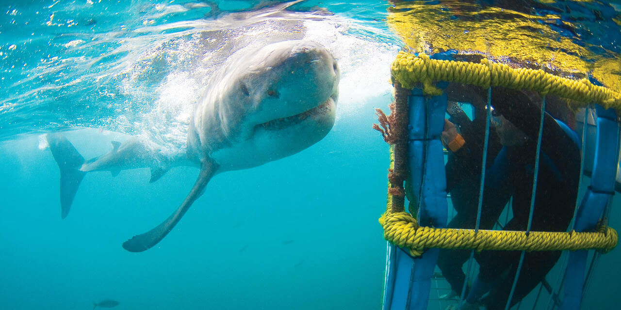 Great white shark cage diving in cape town 4