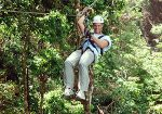 Tree Top Zipline Tour in Hermanus